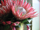 Church Flowers.  Discover how to create arrangements on a  very low budget but with high impact./