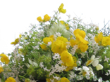 Wedding bouquets with wild flowers, garden weddings and Summer bouquets.